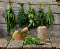 Aromatic herbs lovage, dill, cilantro, hyssop, sage. On a wooden background stock photos