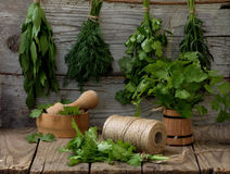 Aromatic herbs lovage, dill, cilantro, hyssop, sage. On a wooden background stock images
