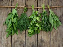Aromatic herbs lovage, dill, cilantro, hyssop, sage,. Aromatic herbs lovage, dill, cilantro, hyssop, sage on a wooden background stock image