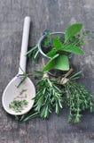 Aromatic herbs Stock Photo