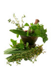 Aromatic herbs in a mortar Stock Photography