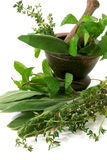 Aromatic herbs in a mortar Stock Image