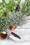 Aromatic herbs potted on a garden table Stock Photos