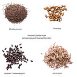 Aromatic herbs seeds royalty free stock images