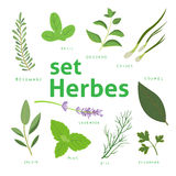 Aromatic herbs set. Fresh herbs and spices set. Vector illustration. eps 10. Stock Image