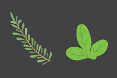 Aromatic herbs set. Fresh  and spices . Vector illustration. Stock Photos