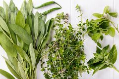 Aromatic herbs and spices from the garden royalty free stock photography