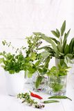 Aromatic herbs and spices from the garden stock photos