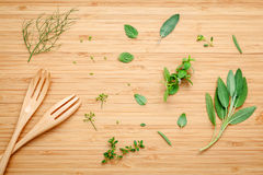 Aromatic herbs and spices  green mint ,fennel ,oregano, sage,lem Royalty Free Stock Images