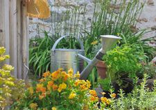 Aromatic herbs and watering can Royalty Free Stock Image