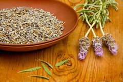 Aromatic Lavender Royalty Free Stock Photography