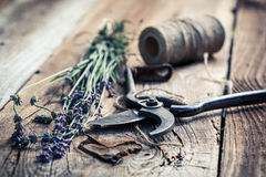 Aromatic lavender Stock Images