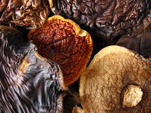 Aromatic mushrooms composition Stock Photography