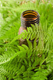 Aromatic oil and Fern Leaf Royalty Free Stock Image