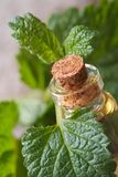 Aromatic oils Lemon balm in a glass bottle with fresh leaves Stock Photos