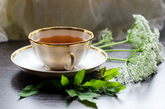 Aromatic organic natural herbal Pimpinella saxifrage tea stock photo