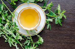 Aromatic organic natural herbal sweet-clover tea Royalty Free Stock Photos