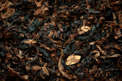 Aromatic pipe tobacco background. Aromatic pipe tobacco background, macro, closeup stock photo