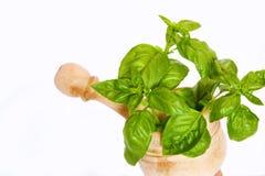 Basil plant. Aromatic plant of basil on white background Royalty Free Stock Images
