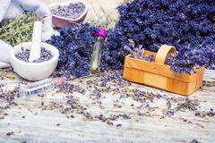 Aromatic plant, lavender. Aromatic plant, fresh and dried lavender stock photos