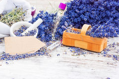 Aromatic plant, lavender. Aromatic plant, fresh and dried lavender royalty free stock photography