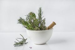 Aromatic plant: lavender, rosemary, thyme in the white ceramic mortar with pestle on white background. Lavender, rosemary, thyme in the white ceramic mortar with stock image