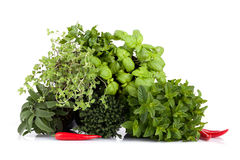 Aromatic Plants Mix Royalty Free Stock Images