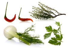 Aromatic plants over white background Stock Image