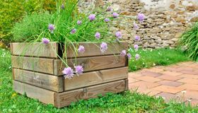 Aromatic plants in planter stock images