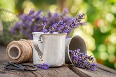 Aromatic and pleasant lavender in summer countryside. On wooden table stock photo