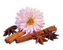 Aromatic spices Stock Photos