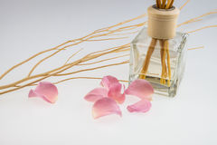 Aromatic sticks with light pink rose and dried wood stick Stock Image