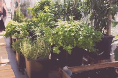 Aromatic urban roof garden Royalty Free Stock Photography