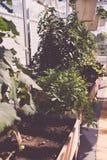 Aromatic urban roof garden Royalty Free Stock Photo