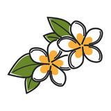 Aromatic vanilla flowers with green leaves isolated illustration. Aromatic vanilla flowers with green leaves isolated cartoon vector illustration on white Royalty Free Stock Photos