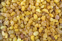 Aromatic yellow resin gum from Sudanese Frankincense tree, incen Stock Photography