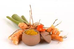 Aromatica sauvage frais Salisb de safran des Indes de safran des indes et de poudre herbe de la Thaïlande photos libres de droits