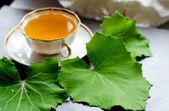 Aromatisch organisch natuurlijk aftreksel van de bladeren coltsfoot Stock Afbeeldingen