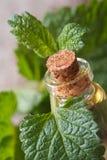 Aromatische Öle Melisse in einer Glasflasche mit frischen Blättern stockfotos
