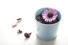 Aromatische droge bloem Stock Foto's