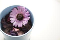 Aromatische droge bloem Royalty-vrije Stock Foto's