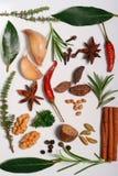 Aromatische Kräuter Stockbild