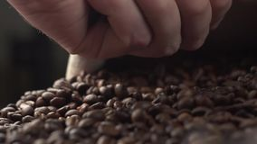 Aromatische Röstkaffeebohnen, die über einer Tabelle, Hände prüfen Qualität in der Zeitlupe gehalten werden stock video