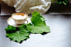 Aromatischer organischer natürlicher Kräutertee vom Blätter Coltsfoot Stockfoto