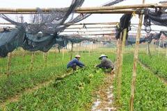 Aromatisches Gemüse der Landwirternte Lizenzfreie Stockfotos