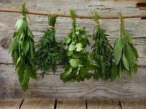 Aromatisk örtlovage, dill, koriander, hyssop, vis man royaltyfri bild