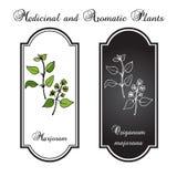 Aromatisk örtsamling - mejram Vektor Illustrationer