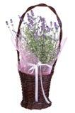 Aromatisk lavendel i en korg som isoleras på vit Fotografering för Bildbyråer