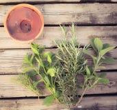 aromatiska örtar Royaltyfri Bild