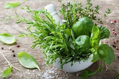 Aromatiska örter i mortelbunke Basilika, timjan, rosmarin och dragon Nya ingredienser för matlagning royaltyfria foton